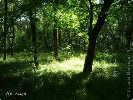 Наш район в Краснодарском крае называют маленькой Швейцарией. Красивейшая природа, уникальные достопримечательности. Приглашаю вас на экскурсию фото 18