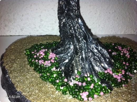 Сакура фото 3