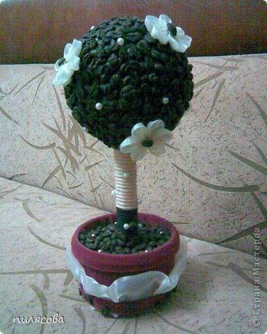 Давно вынашивала идею смастерить кофейное деревце. И наконец вот оно. фото 2