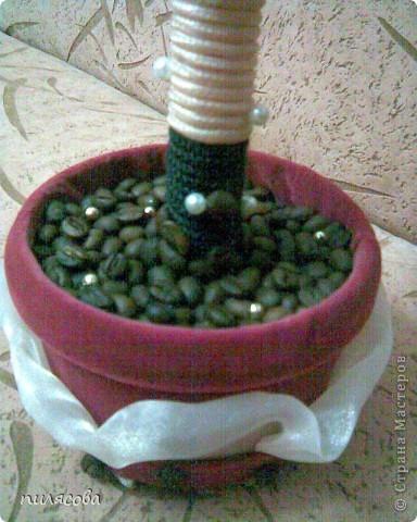 Давно вынашивала идею смастерить кофейное деревце. И наконец вот оно. фото 3