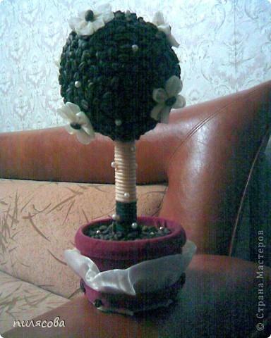 Давно вынашивала идею смастерить кофейное деревце. И наконец вот оно. фото 6