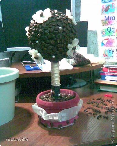 Давно вынашивала идею смастерить кофейное деревце. И наконец вот оно. фото 7