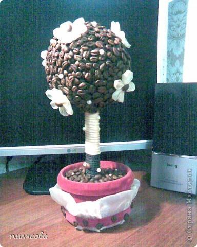 Давно вынашивала идею смастерить кофейное деревце. И наконец вот оно. фото 8