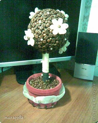 Давно вынашивала идею смастерить кофейное деревце. И наконец вот оно. фото 10