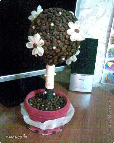 Давно вынашивала идею смастерить кофейное деревце. И наконец вот оно. фото 11