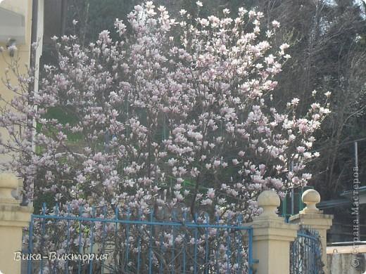 Хочу показать вам розы, что расцвели у нашего дедушки в саду, мы вчера были у него в гостях и я не удержалась - сфоткала несколько самых красивых, вот хочу поделиться с вами . фото 11