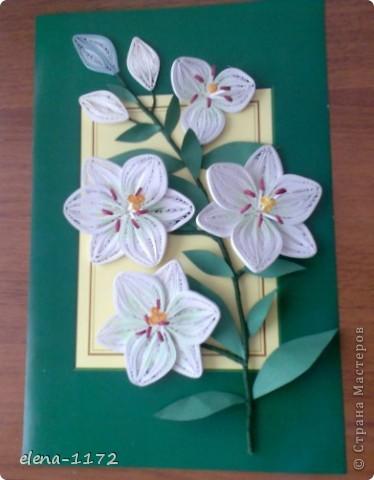 1. Вот и у меня зацвели лилии. Спасибо Пылинке за МК. фото 1