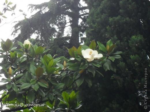 Хочу показать вам розы, что расцвели у нашего дедушки в саду, мы вчера были у него в гостях и я не удержалась - сфоткала несколько самых красивых, вот хочу поделиться с вами . фото 8