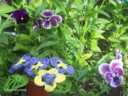 Вот такие цветочки наваялись за последние холодные денёчки.Это на клумбочке, фото 1