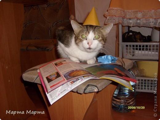 Нашей кошечке Марте исполняется 6 лет. Дама в самом расцвете сил! Поэтому я решила написать про неё! Вот такая она красавица! фото 7