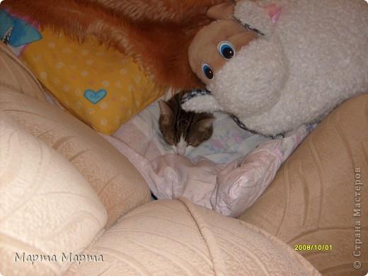 Нашей кошечке Марте исполняется 6 лет. Дама в самом расцвете сил! Поэтому я решила написать про неё! Вот такая она красавица! фото 5