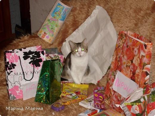 Нашей кошечке Марте исполняется 6 лет. Дама в самом расцвете сил! Поэтому я решила написать про неё! Вот такая она красавица! фото 8