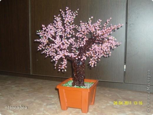 Моё первое деревце фото 1