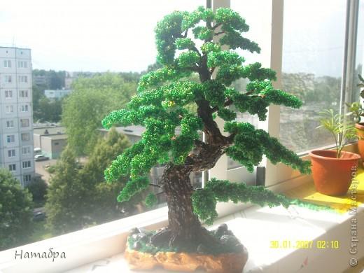 Моё первое деревце фото 2