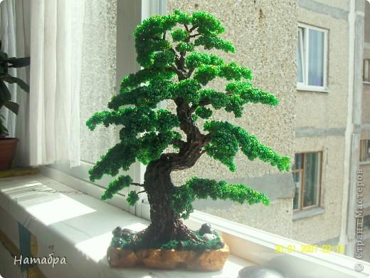 Моё первое деревце фото 3