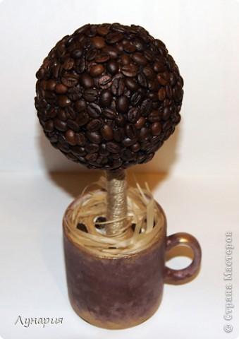 Наконец-то и я  сделала себе кофейное деревце! Любовалась на работы других, и не удержалась. фото 1