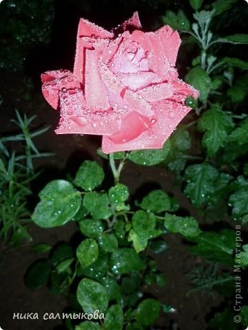 Вечером прошла гроза с сильным дождем, вышла подышать перед сном свежим воздухом, а там так красиво, хоть уже было темно фото 3