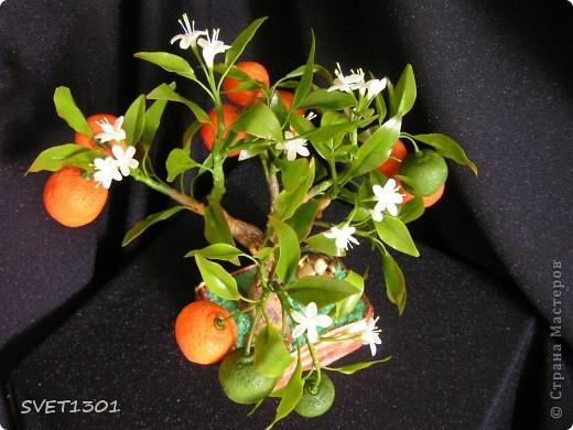 Давно хотела слепить апельсиновое дерево из своего ХФ и вот наконец я его сделала!!! Далее я разместила фотографии разных ракурсов.  фото 3