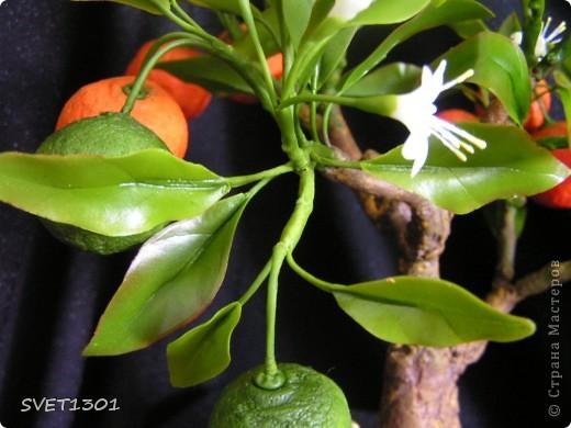 Давно хотела слепить апельсиновое дерево из своего ХФ и вот наконец я его сделала!!! Далее я разместила фотографии разных ракурсов.  фото 4