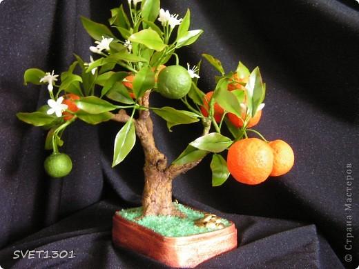 Давно хотела слепить апельсиновое дерево из своего ХФ и вот наконец я его сделала!!! Далее я разместила фотографии разных ракурсов.  фото 1