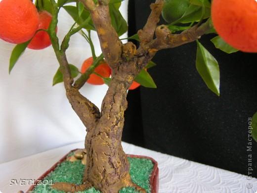 Давно хотела слепить апельсиновое дерево из своего ХФ и вот наконец я его сделала!!! Далее я разместила фотографии разных ракурсов.  фото 8