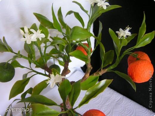 Давно хотела слепить апельсиновое дерево из своего ХФ и вот наконец я его сделала!!! Далее я разместила фотографии разных ракурсов.  фото 5