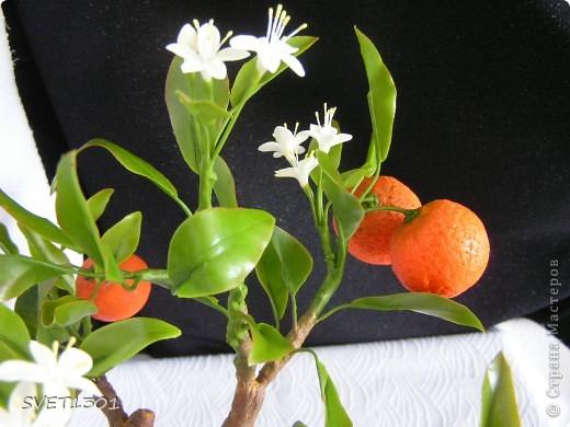 Давно хотела слепить апельсиновое дерево из своего ХФ и вот наконец я его сделала!!! Далее я разместила фотографии разных ракурсов.  фото 6