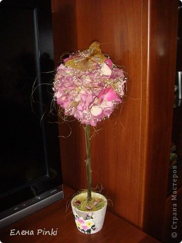 Здравствуйте дорогие мастерицы!!!наверняка не я одна такая...мне вот всегда очень жалко выбрасывать цветочки после того как они завяли и в этот раз после своего дня рождения я решила не выкидывать, а посушить...   фото 6