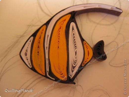Картина панно рисунок Мастер-класс Рама паспарту Бумагопластика Вырезание Квиллинг Аквариум Бумага Бумажные полосы Картон фото 24