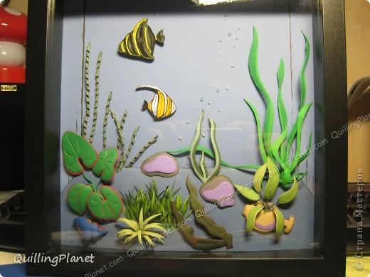 Картина панно рисунок Мастер-класс Рама паспарту Бумагопластика Вырезание Квиллинг Аквариум Бумага Бумажные полосы Картон фото 1