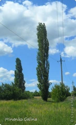 """Немого облаков и деревьев, которые растут в посёлке Корсунь города Енакиево.  Вид этих тополей напомнил легенду.В одном из украинских сёл жила очень красивая, но и очень ленивая девушка Поля(Полина).Бог решил наказать её и превратил в стройное дерево, которое обречено жить в одиночестве, потому что его ветки направлены вертикально вверх, и даже птицы не могут свить на нём гнездо. Родители начали искать девушку и спрашивать у всех:""""Где Поля?"""". А люди, которые видели превращение девушки в дерево, показывали на него рукой и говорили: """"То Поля, то Поля."""" Так с тех пор это дерево на Украине и называют:тополя(жен.рода). фото 1"""