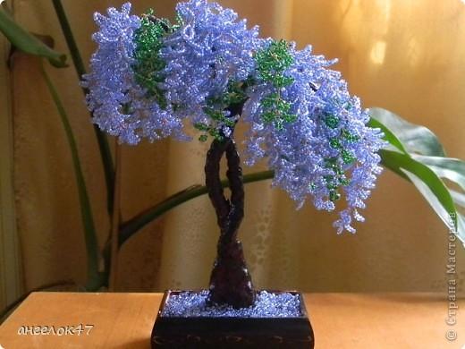 орхидея. фото 3