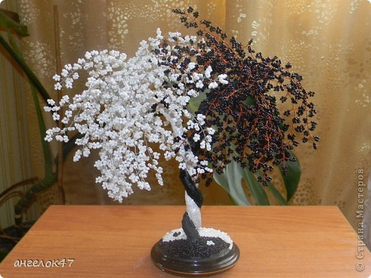 орхидея. фото 5