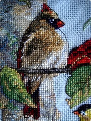 Не могу не поставить новую работу мамы - вышила мелких птичек, типичных для нашего региона - центра Северной Америки. Очень красиво! Голубая канва. Еще без рамки, но спешу поставить. Молодец мама! фото 3
