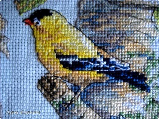 Не могу не поставить новую работу мамы - вышила мелких птичек, типичных для нашего региона - центра Северной Америки. Очень красиво! Голубая канва. Еще без рамки, но спешу поставить. Молодец мама! фото 4