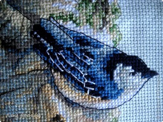 Не могу не поставить новую работу мамы - вышила мелких птичек, типичных для нашего региона - центра Северной Америки. Очень красиво! Голубая канва. Еще без рамки, но спешу поставить. Молодец мама! фото 6