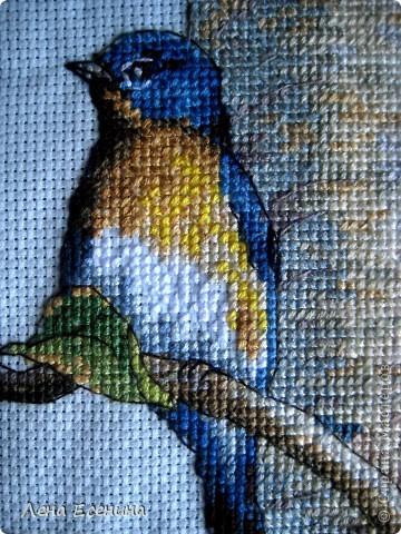 Не могу не поставить новую работу мамы - вышила мелких птичек, типичных для нашего региона - центра Северной Америки. Очень красиво! Голубая канва. Еще без рамки, но спешу поставить. Молодец мама! фото 8