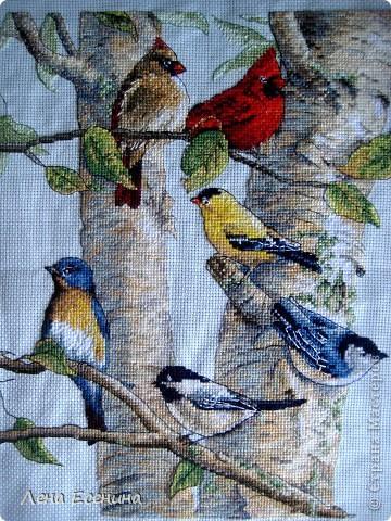 Не могу не поставить новую работу мамы - вышила мелких птичек, типичных для нашего региона - центра Северной Америки. Очень красиво! Голубая канва. Еще без рамки, но спешу поставить. Молодец мама! фото 1