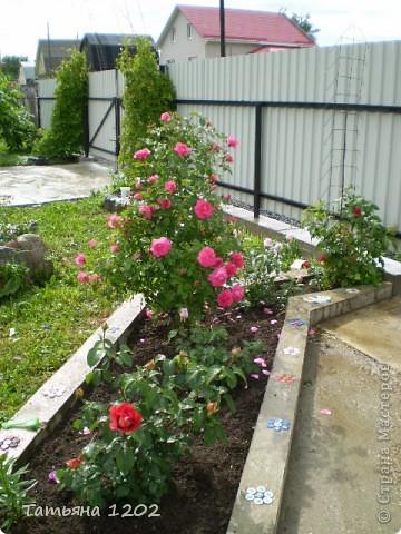 Розы как они прекрасны фото 1