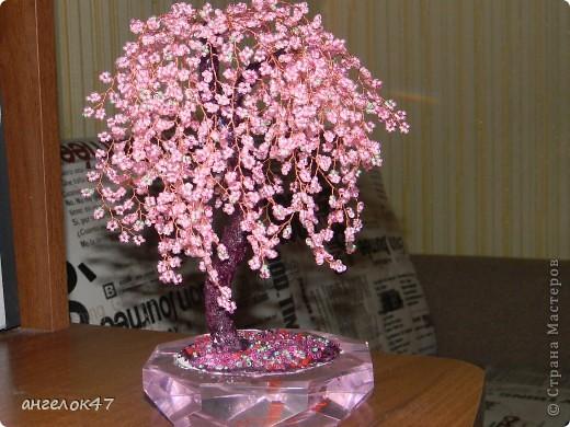 орхидея. фото 8