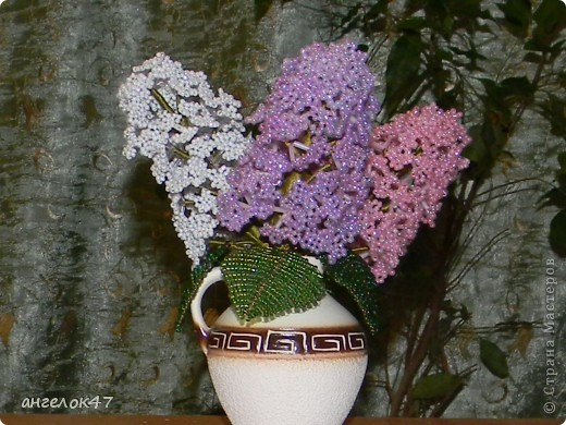 орхидея. фото 10