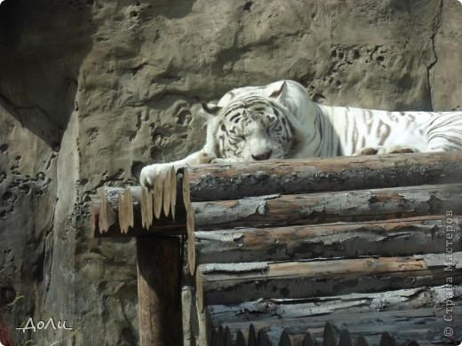 С моей тётей и сестрой мы были на экскурсии в зоопарке. В зоопарке я была не первый и думаю не поседний раз. И каждая прогулка в зоопарке для меня море удовольствия! фото 2