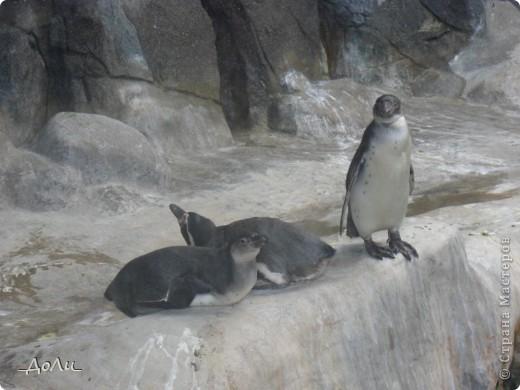 С моей тётей и сестрой мы были на экскурсии в зоопарке. В зоопарке я была не первый и думаю не поседний раз. И каждая прогулка в зоопарке для меня море удовольствия! фото 3