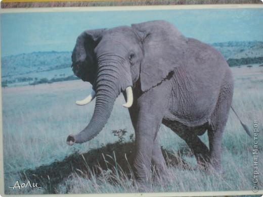 С моей тётей и сестрой мы были на экскурсии в зоопарке. В зоопарке я была не первый и думаю не поседний раз. И каждая прогулка в зоопарке для меня море удовольствия! фото 11