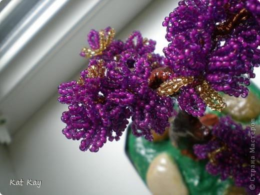 Фиолетовый он потому что хотелось необычное дерево. фото 4