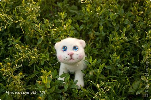 Котенок - потеряшка фото 3