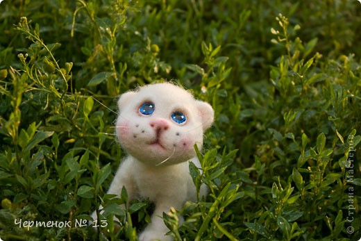 Котенок - потеряшка фото 2