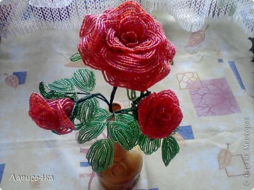Роза для себя любимой