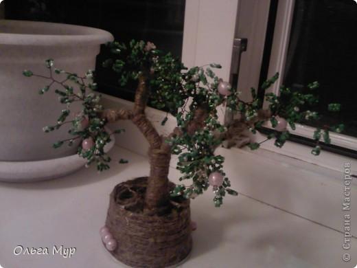 Вот наконец и я вырастила дерево))) фото 1