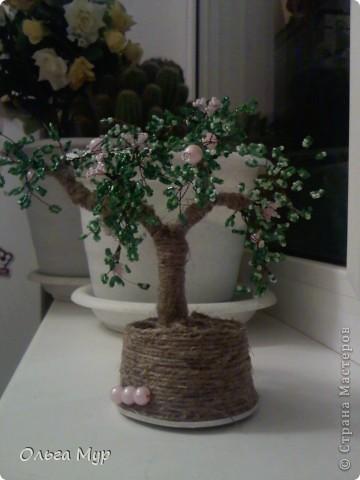 Вот наконец и я вырастила дерево))) фото 2
